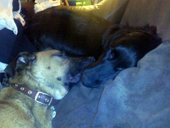 Ben & Tilly taking a nap.
