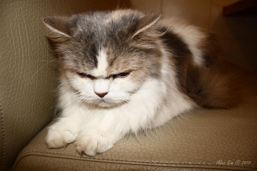 angry wet kitten - 900×600