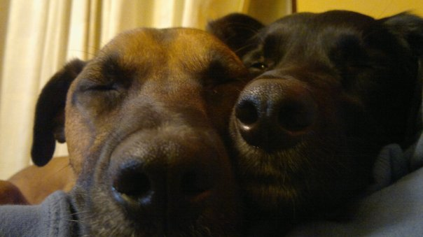 Sleepy Dogs