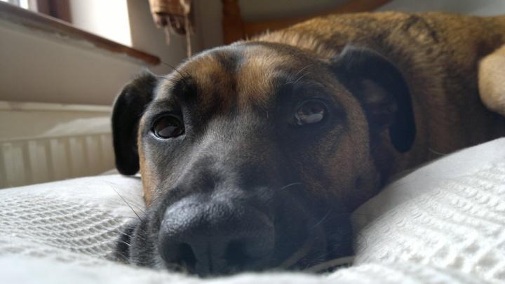 dozingdog1