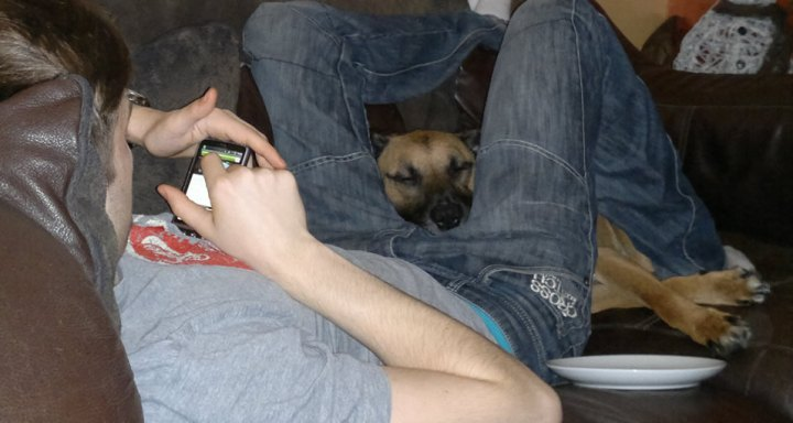 dozingdog3
