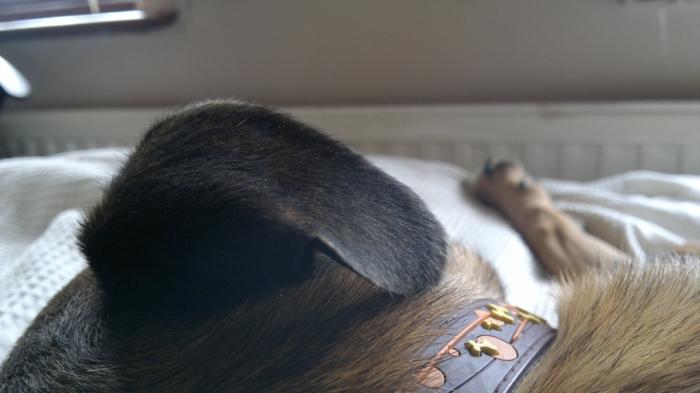 dozingdog4