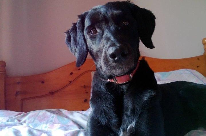 silkydog