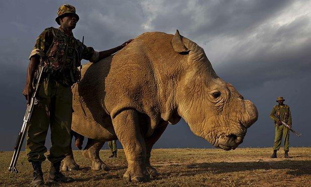 Sudan-the-last-male-north-009